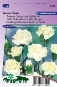 Oeillet Chabaud Géant double Jeanne Dionis, Blanc pur