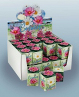 Greengift, Cosmea 40 pcs en showbox