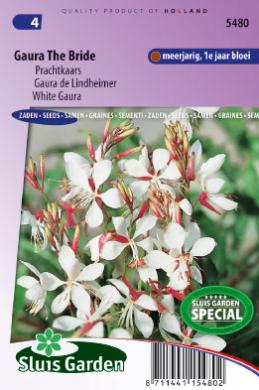 Gaura de Lindheimer The Bride