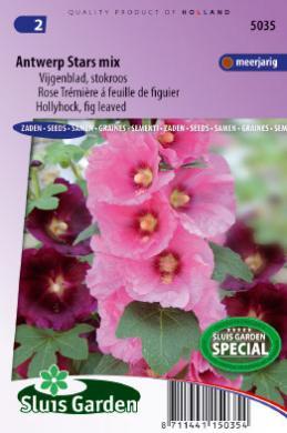 35 Alcea rouge rose trémière Graines de fleurs//vivace